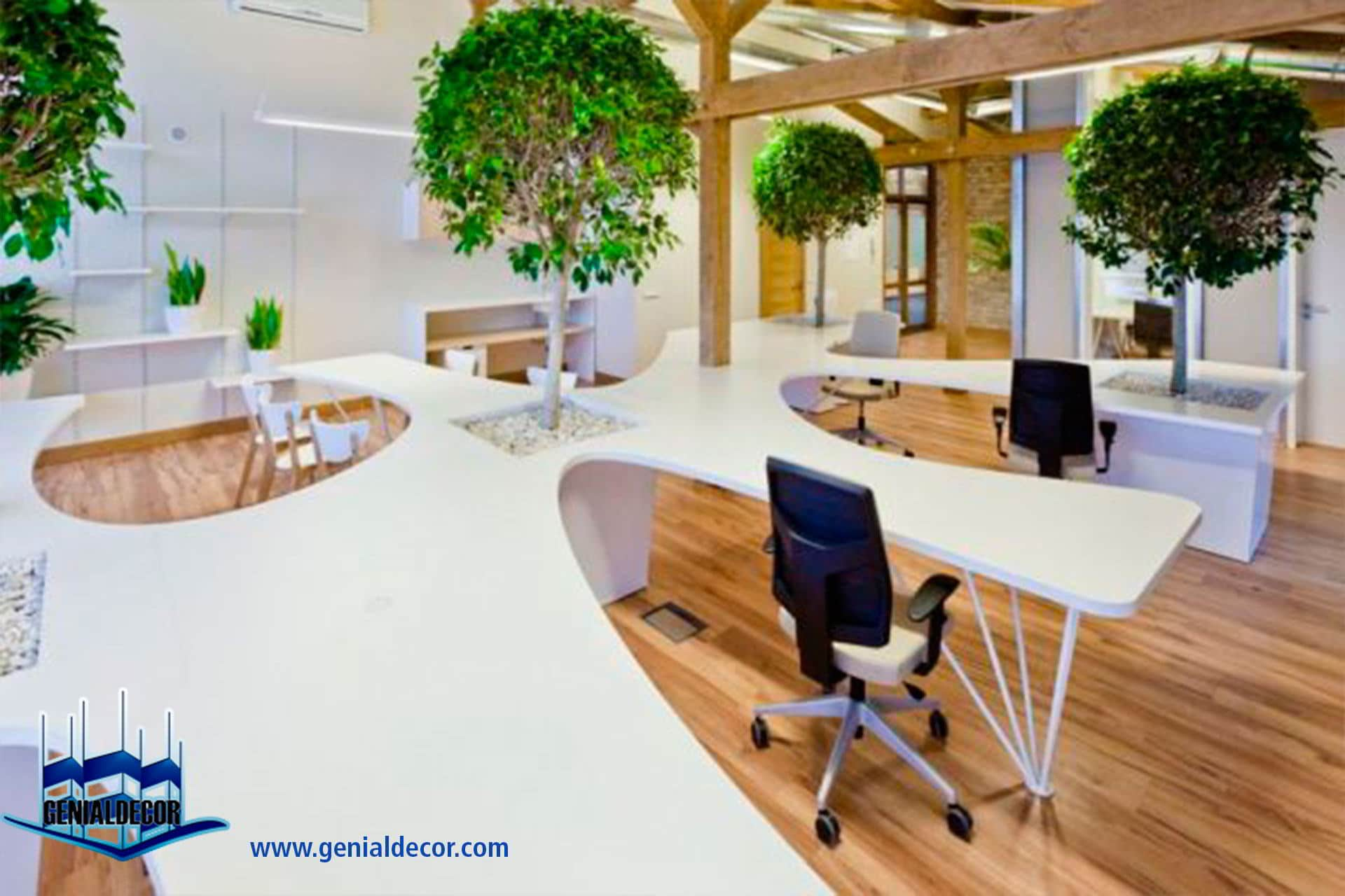 5 tips para decorar tu oficina genialdecor for Plantas decorativas para oficina